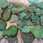 Turquoise P1030772