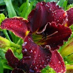 Garden P1040053