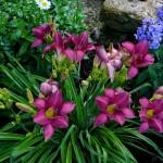 Garden P1040055