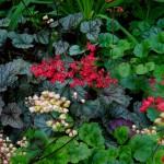 Garden P1040219