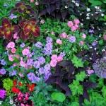 Garden P1040249