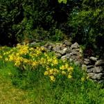 Garden P1040313