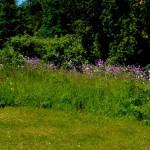 Garden P1040315
