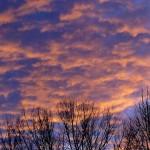 Sun Set P1130287
