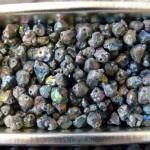 Gems P1140762